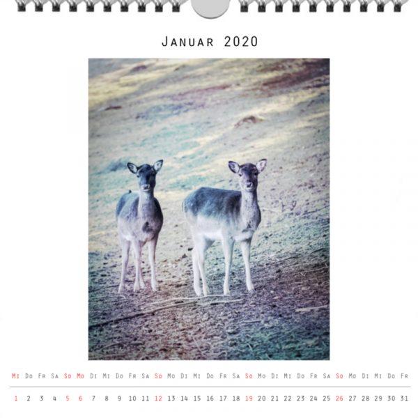 Foto: »Kalender 2020 - Monat Januar«