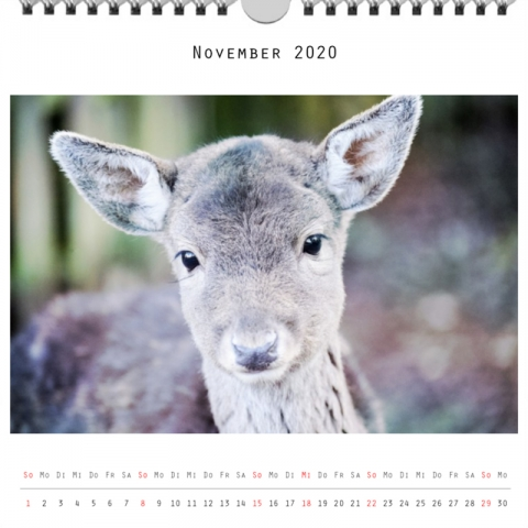 Foto: »Kalender 2020 - Monat November«