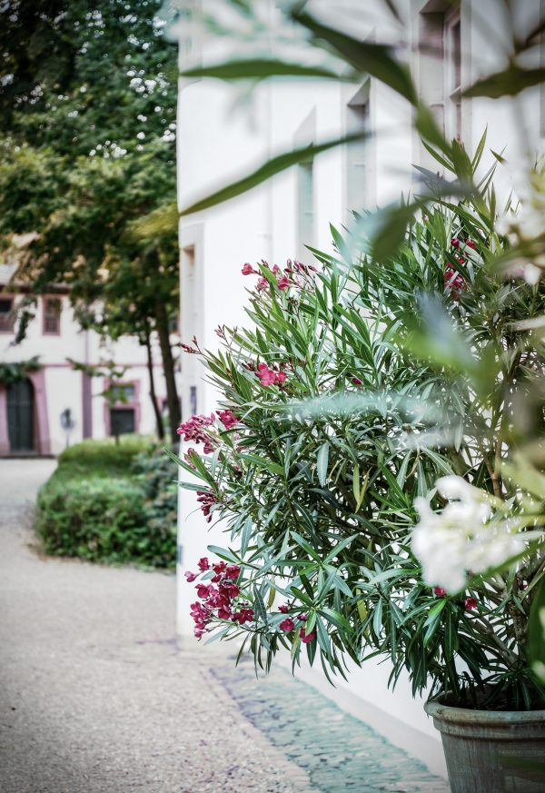 Foto: »Schloss Fürstenau bei Michelstadt - No.5«