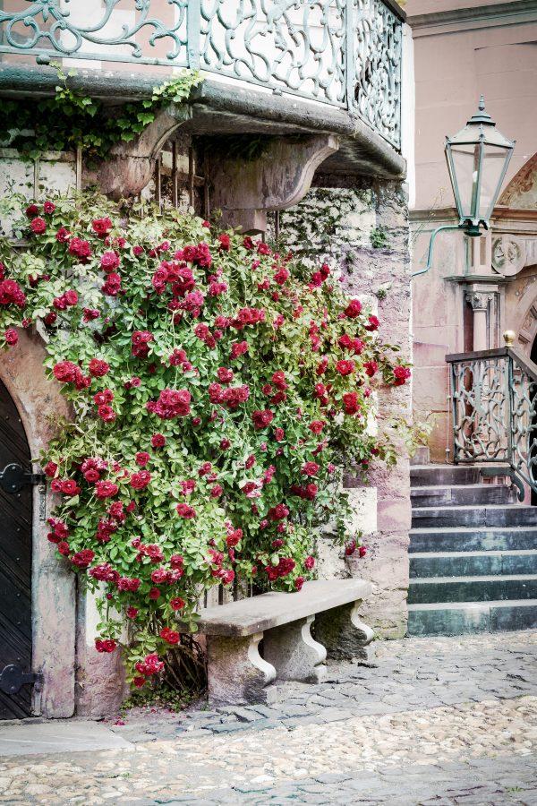 Foto: »Schloss Weilburg - No.2«